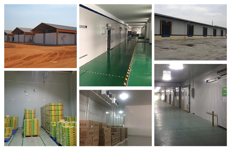 Introduction of cold storage